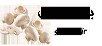 قیمت خرید و فروش انواع قارچ دکمه ای | قارچ ایران